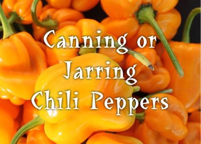 Learn how to can your chili peppers so you can preserve your pepper harvest and…