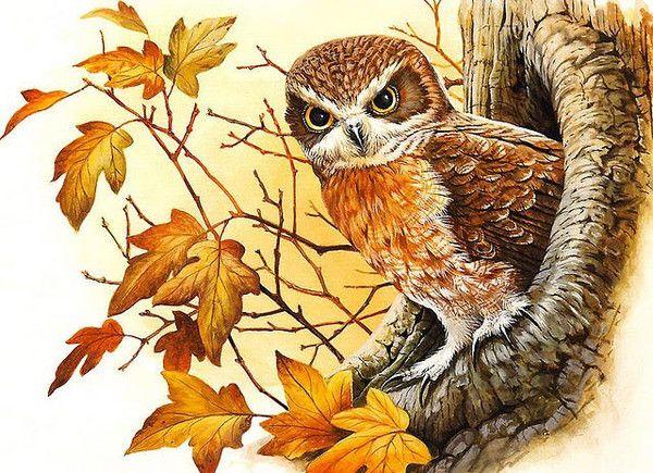 Pourquoi les hiboux ne sortent que la nuit (conte allemand) Il y a très longtemps de cela, les hiboux étaient les teinturiers de la forêt.