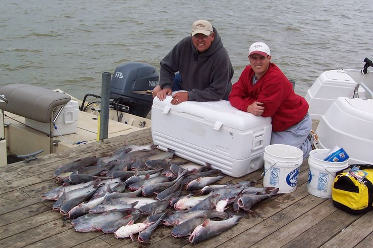 Bank fishing or fishing from the shore is a popular approach to fishing for catfish. Not all anglers have access to boats but that certainly doesn't limit your ability to ...