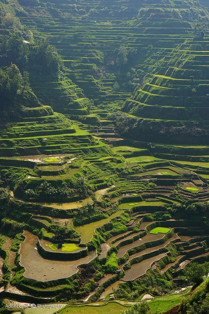 149 Best Images About Roam The Earth On Pinterest Table Mountain Banaue Rice Terraces And Egypt