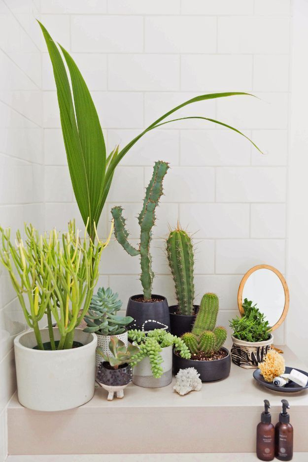 DIY Hacks for Renters – Create Indoor Garden – Easy Ways to Decorate and Fix Things on Rental Property – Decorate Walls, Cheap Ideas for Making an Apa