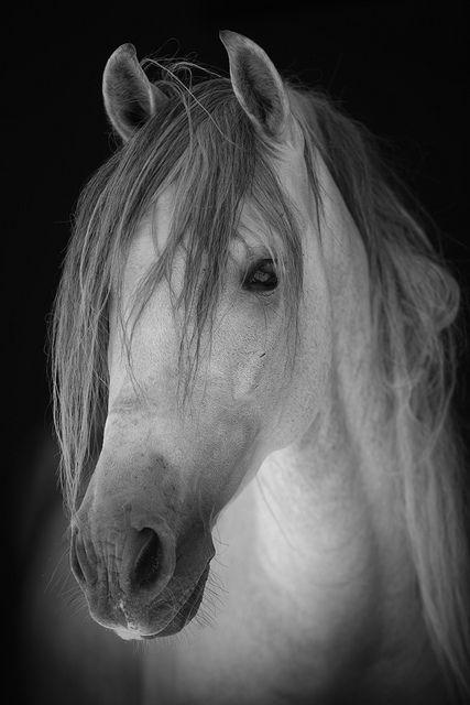 .white horse: