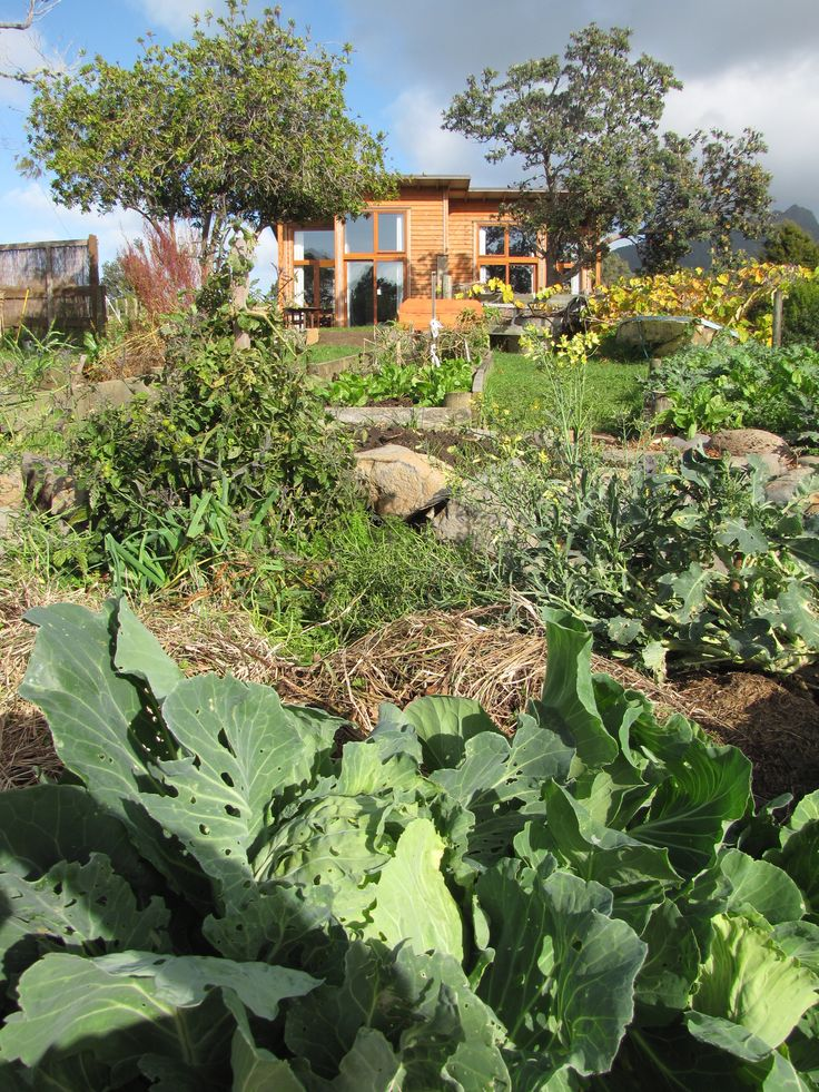 Permaculture and sustainability - Growth, learning, inspiration … whatever you choose to call it … occurs for people while at Solscape. By simply spending time amongst the natural beauty surrounded by inspiring and innovative structures, activities and people, shifts in awareness happen.