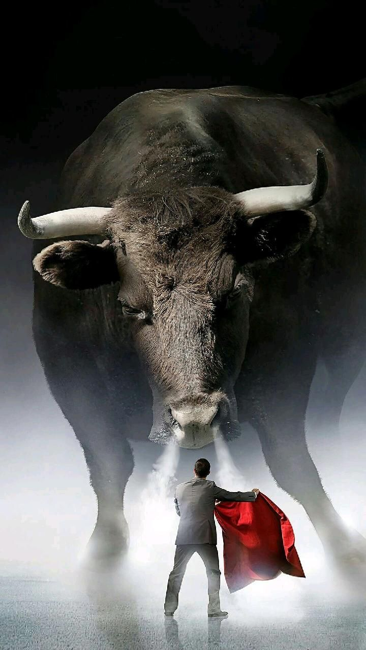 Download Bull Vs Man Wallpaper By Varunvenky6342043 Now Browse Millions Of Popular Galaxy Wallpapers And Ringtones O Bulls Wallpaper Cats Illustration Animals