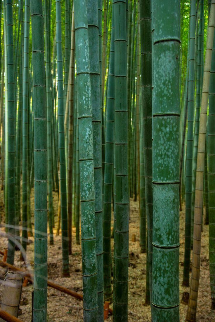 Visiting Arashiyama Bamboo Grove In Kyoto Japan Kyoto Japan