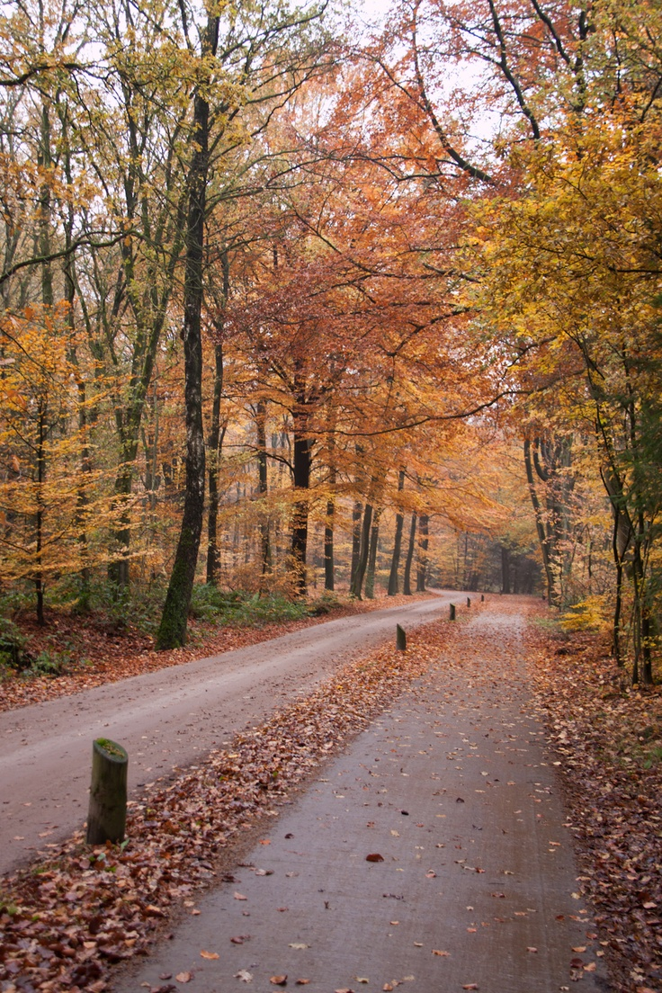 Speulderbos, bij Ermelo (Holland)