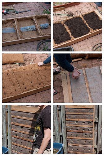 "Mini ""Living Wall"" experiment | Flickr - Photo Sharing!"