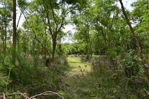 Natural burial site near Heerenveen (the Netherlands); natuurbegraafplaats Friesland. Landscape design by Vollmer & Partners