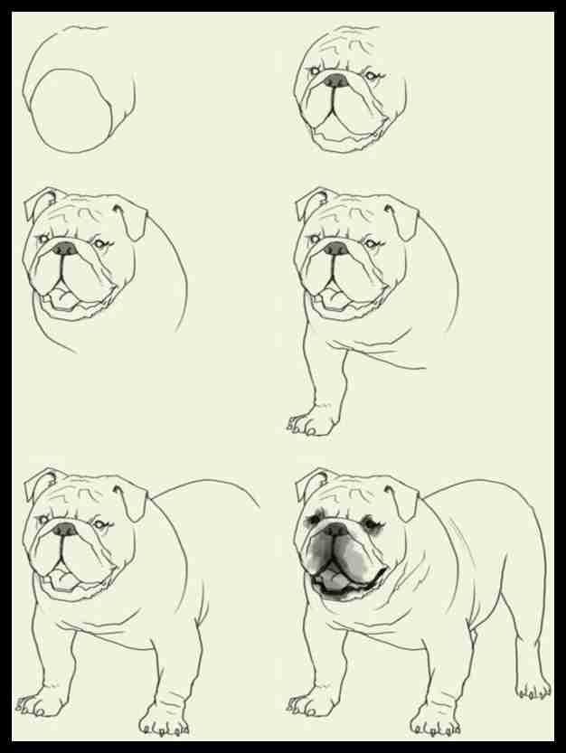 How To Draw A Dog Step By Step Easily 35 Ideas Drawing Ck Zeichnungen Hund Zeichnen Tiere Zeichnen Tiere Malen