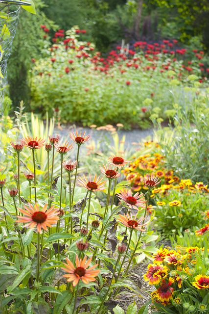 Echinacea and Gaillardia with Mondarda in the background #garden