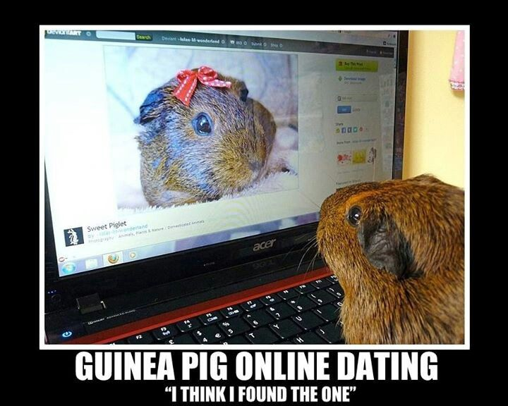 guinea pig matchmaking Find great deals on ebay for guinea pig cage and large guinea pig cage shop with confidence.