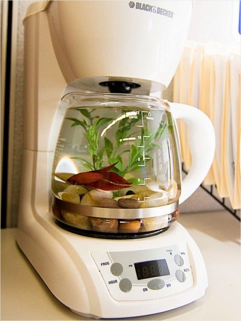 """Coffeemaker + Fish = Aquarium  Put the """"kitsch"""" into repurposed kitchen appliances by turning an old coffeemaker into a funky new fishbowl for Goldie. Just be sure to keep it unplugged and far away from the real thing to prevent early a.m. mix-ups!"""