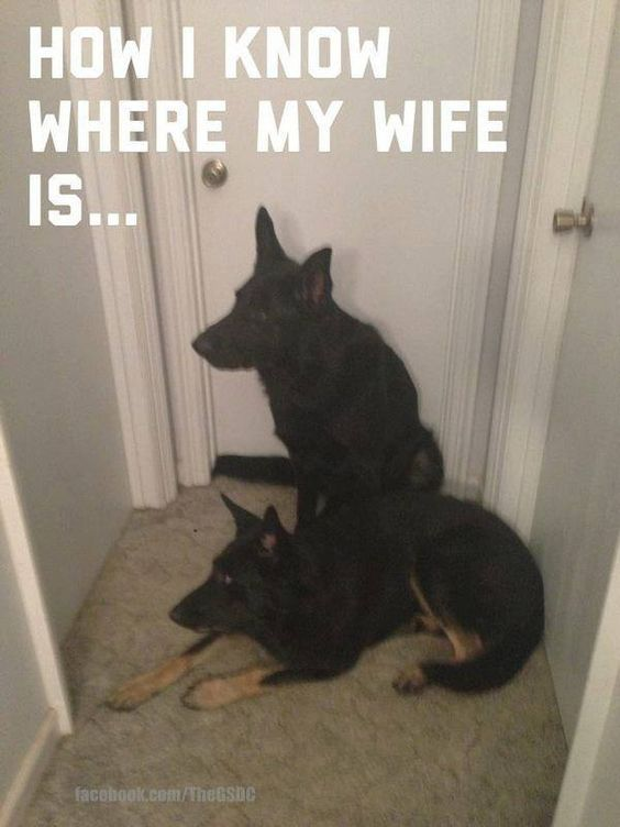 Looking for the wife? Find the dogs.