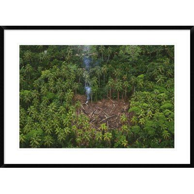 """Global Gallery 'Traditional Slash and Burn Clearcut' Framed Photographic Print Size: 26"""" H x 36"""" W x 1.5"""" D"""