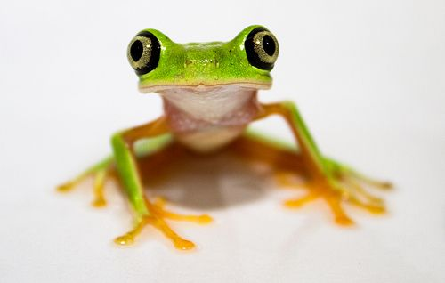 About Amphibians and Reptiles