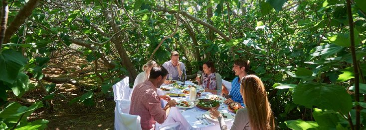 Enchanted Fig Tree Hannaford and Sachs Kangaroo Island