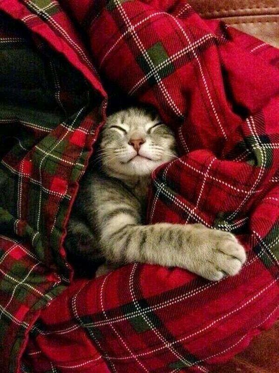 Cats sleep fifteen to twenty hours a day no matter the season