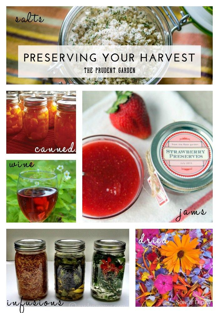 Get recipes, tips and ideas for preserving your harvest from real gardeners. This roundup of preserving recipes from top garden bloggers will inspire you.