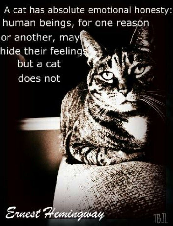 Ernest Hemingway quote about cats and humans.Sometimes I think that cats are better than humans because they judge you and love you Unconditionally.