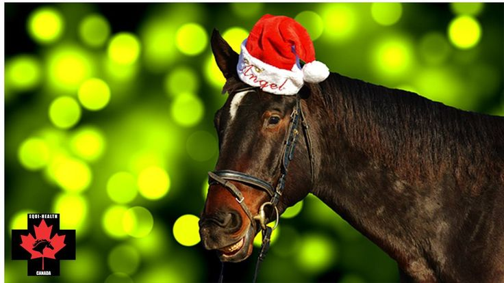 Struggling with what to buy that horse-crazy person in your world for Christmas? Give them an Equi-Health Canada gift certificate! It's unique, and their horse will thank you! (and so will they, of course!). Valid for any class, service or product we offer, anywhere across Canada! Available in any denomination! Visit the website or call us at 888-938-6687. We customize for free, too!  #equihealthcanada #horse #firstaid #horses