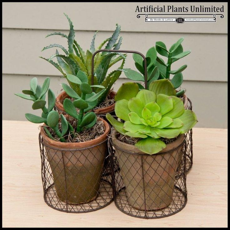 1000 images about artificial succulents cacti on pinterest terrarium containers artificial. Black Bedroom Furniture Sets. Home Design Ideas