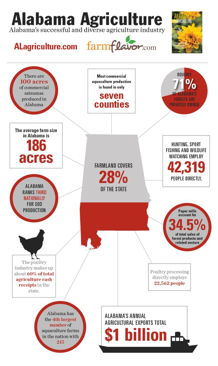 Helpful infographic featuring overview statistics of Alabama's agriculture industry from Alabama Agriculture magazine.