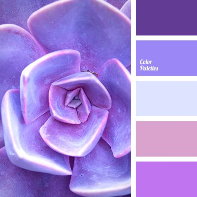 Color Combination Cool Shades Of Violet Lilac Pink