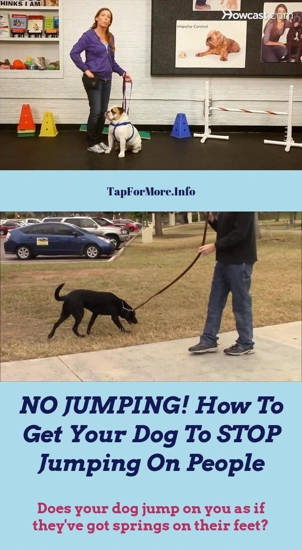 Stop Dog Jumping And How To Potty Train A Puppy Go Outside Check