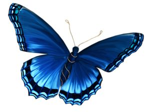 17 Best images about butterfly on Pinterest | Monarch ...