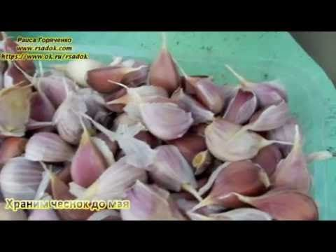 (1) Храним чеснок до мая - YouTube
