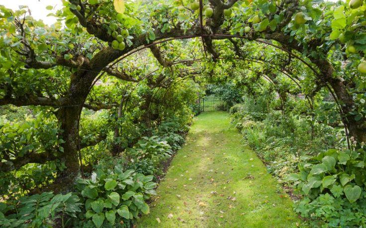 espalier dwarf apple tree fence Google Search Growing