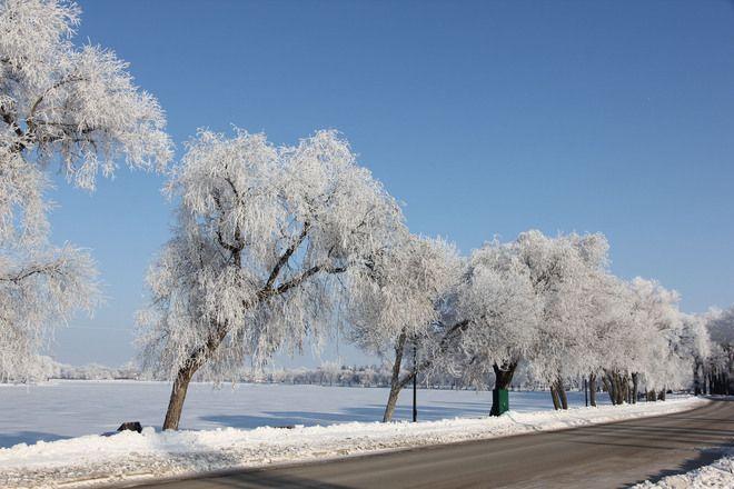 Hoar frost // by Gordon Plunkett, Portage La Prairie, MB