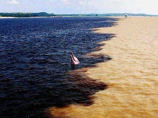 """""""Encuentro de las aguas"""", el río Amazonas se encuentra con el río Negro en Brasil. pic.twitter.com/r1mX6iFiRj"""