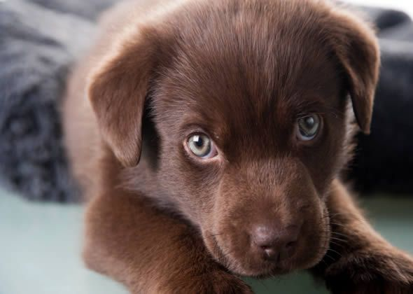 Best Pet Names For Girlfriend: 25+ Best Ideas About Cute Male Dog Names On Pinterest