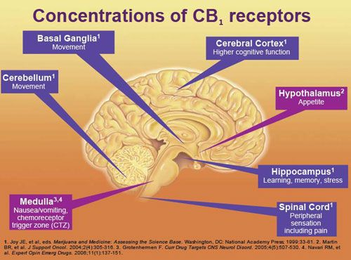 "CB1 and CB2.  Only as recently as 1992 did medical researchers discover this previously unknown, body-wide receptor system that controls or regulates almost every function in the body, by apparently bringing the mind and body back to a state of homeostasis after being stressed by the environment. This system is the ""wisdom of the body"" that we all experience as the body ""just knowing how to fix itself"" after illness."