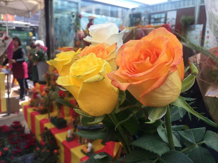 Roses #flowers #roses #tradició