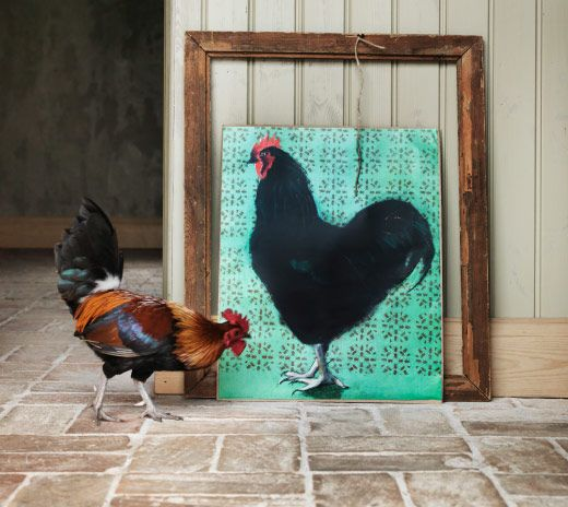 Wooden frame with poster displaying painting of a hen with a live hen in the foreground