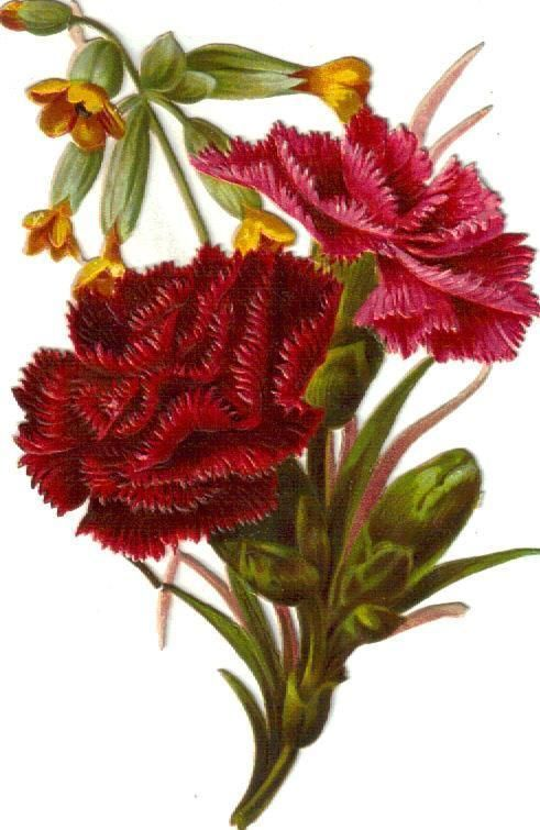Larger Victorian Scrap Carnation Bouquet Die Cut c1880