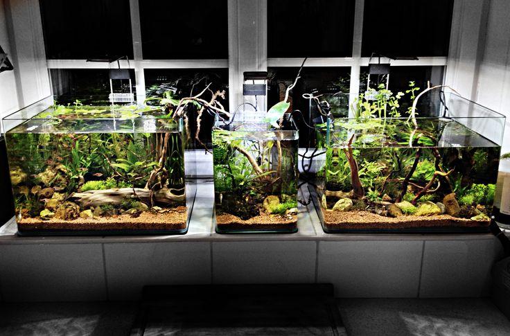 195 Best Images About Vivarium Aquarium Amp Terrariums On