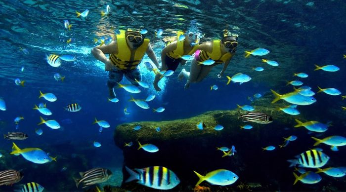 Tri Nguyen Aquarium on Mieu Island is the first place you should visit ...