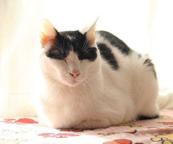 ちびず おしゃれまとめの人気アイデア Pinterest よっこ 猫 子猫 キュートな猫 動物 ペット