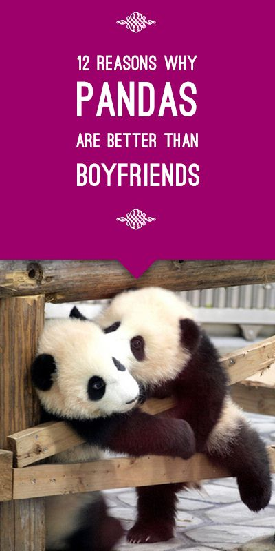 12 Reasons Why Pandas are Better than Boyfriends