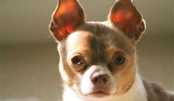 犬のことわざ故事成語人間なら犬より素晴らしく生きよと戒めることわざ