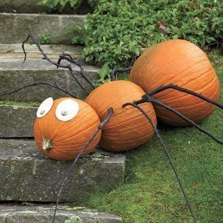 Giant Pumpkin Spider!