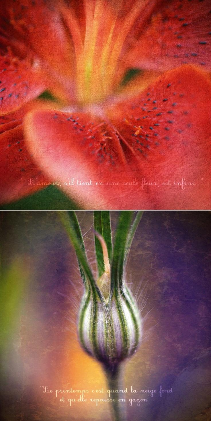 Tableau déco, images de nature, macro-photographie au fil des saisons | Wedding & Portrait Photographer Lyon France | Burgundy, Morocco, Noumea | Tel: +33 (0)9 51 82 92 05