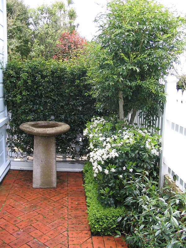 A formal garden of evergreen layers and levels of trees, climbers and hedge, in a small entrance courtyard. Designed by HEDGE Garden Design & Nursery.