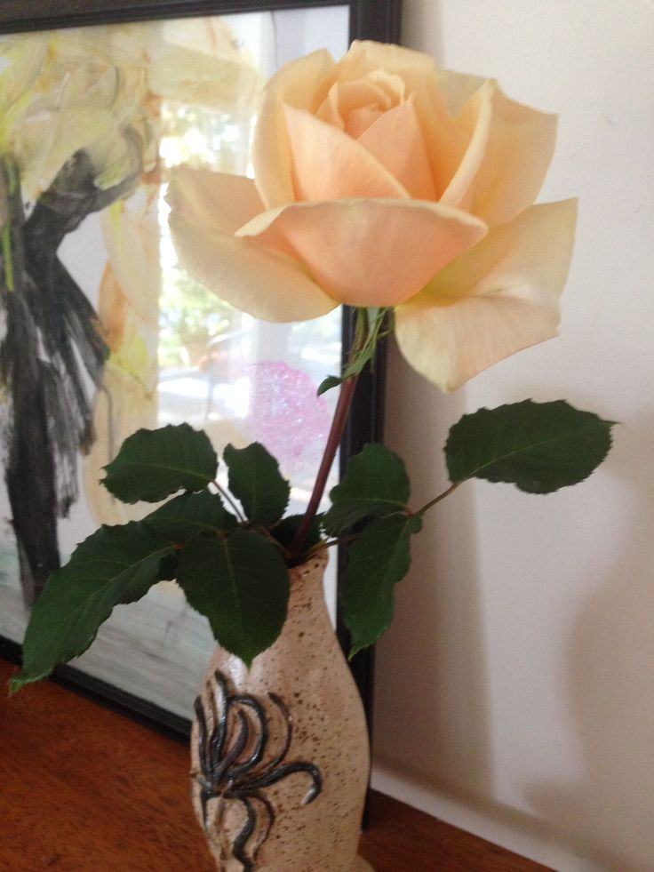 A fragrant old- fashioned rose, a gift from my dear neighbour Maritza