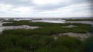 Samphire can be found on marshy sea beds. Make sure you wear wellies! It can be boggy and muddy. Children think it is great fun, but beware they may get stuck in the mud!