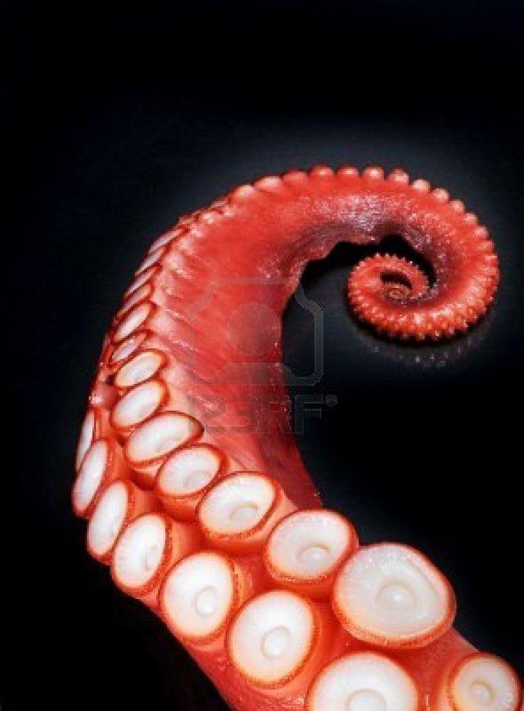 octopus-tentacle.jpg (885×1200)
