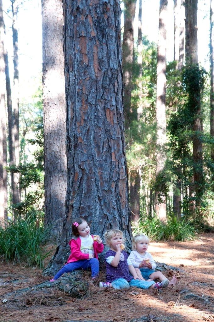 Eating cupcakes in The Pines Picnic Area, Olney State Forest, NSW, Australia. Photo: Bronwyn Ellis for Forests NSW.